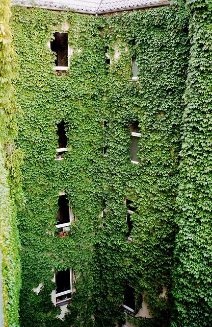 green building http://www.blog.designsquish.com/index.php?/site/vines/