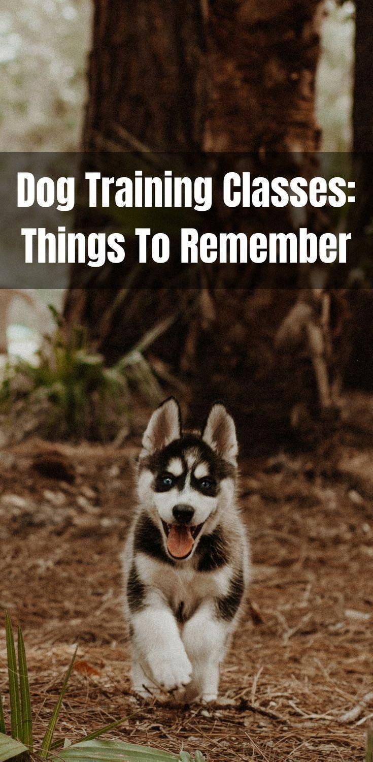 Dog Training Classes Things To Remember. Dog Training