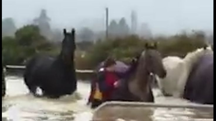 A group of horses stranded in flooded paddocks were walked to safety by residents as inclement weather forced a state of emergency in Dunedin, New Zealand. Police urged people to stay indoors as much of the South Island was affected by severe storm weather.