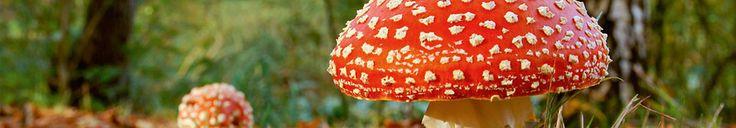 http://www.antigifcentrum.be/natuur/planten/lijst-van-weinig-niet-giftige-planten-0