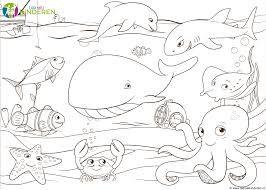Afbeeldingsresultaat voor walvis kleurplaat