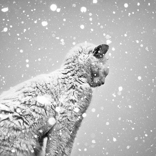 Cat in the snow. Lovely picture, but now that cat deserves a nice fire and a warm bowl of milk!