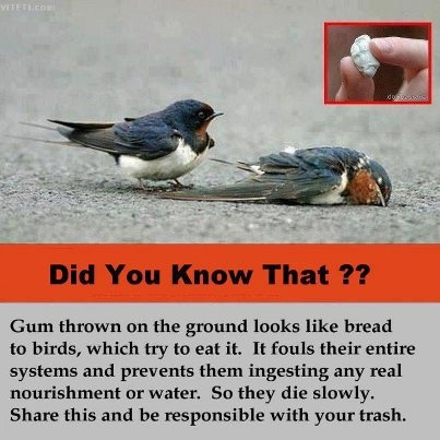 Be responsible!! With plastic bottles too, which. kill and injure thousands of…