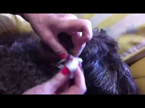How to treat Warts with Apple Cider Vinegar Dog - YouTube