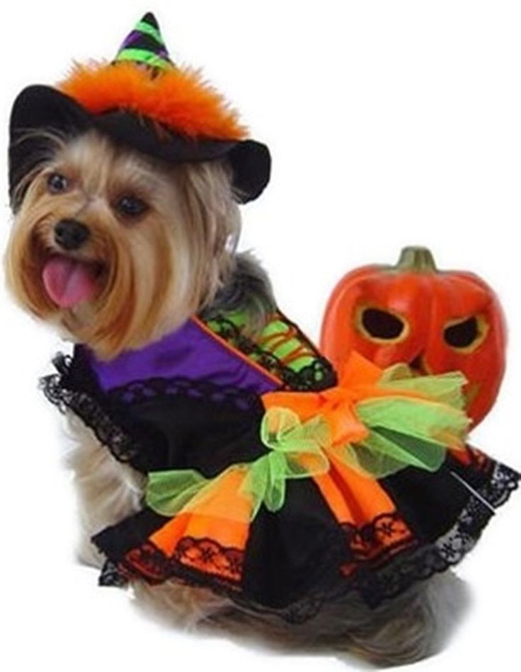 Bootiful Halloween Witch Dog Costume with Tall Hat - Daisey's Doggie Chic