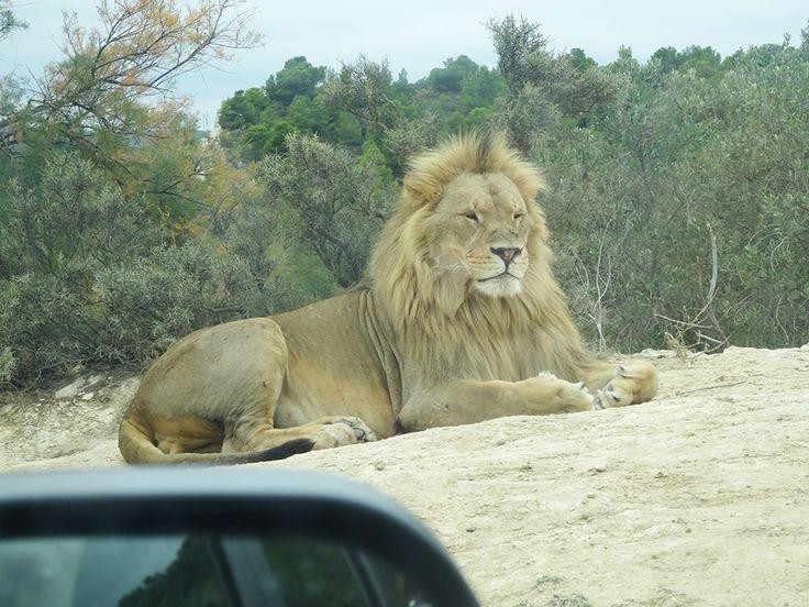 Sigean, réserve africaine Sigean, France
