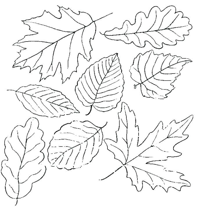 Leaf Coloring Pages Free Download Leaf Coloring Page Fall