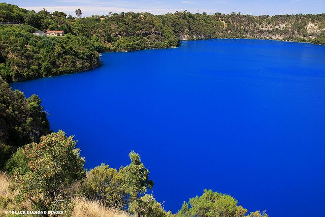The Blue Lake, Mount Gambier. From November till April the cobalt blue of the water seen here is, amazingly, the actual colour of this stunning South Australian Volcanic Lake. For the remaining months of the year the water is a steel grey colour. Copyright Black Diamond Images.