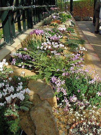 Perfect 113 Best Alpine Garden Ideas Images On Pinterest | Succulents Garden,  Gardening And Landscaping