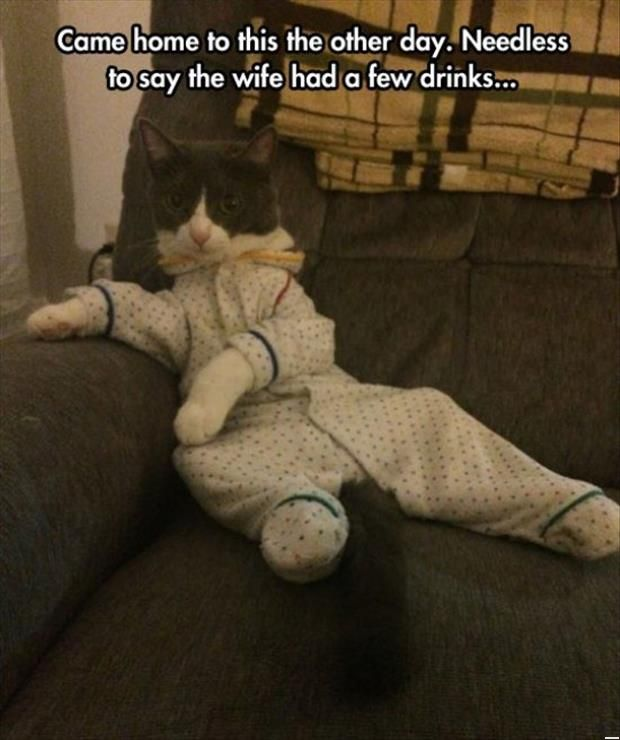 Funny Cats - Wife Has Been Drinking (257 Pics)