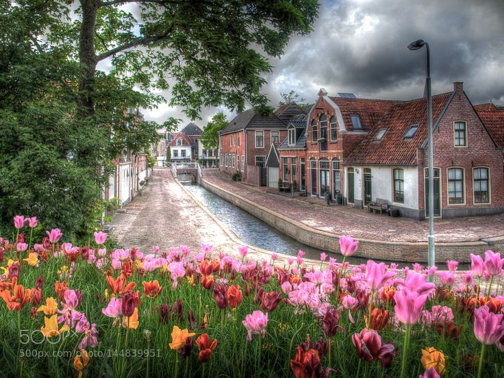 Popular on 500px : Tulip City (Dokkum) by lvdezeeuw