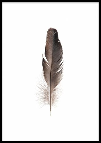 Feather poster. Poster med fjäder. Stilren och enkelt motiv. Enkelt att matcha med våra andra posters och prints. Sätt fjäderpostern i en vit eller svart ram för en fin tavla. Fin både ensam och som en del i en tavelvägg.