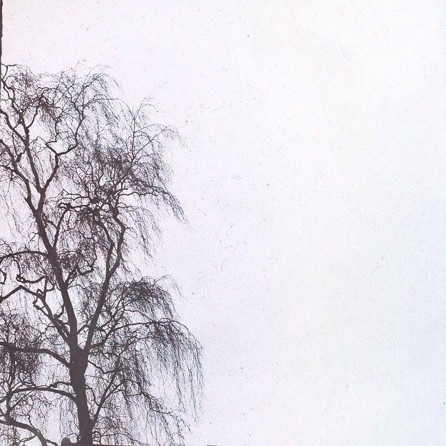 """@sdorphjensen's photo: """"19/30 Not at my bench today - but I love trees! #inplainsight #dailyphoto #tree"""""""
