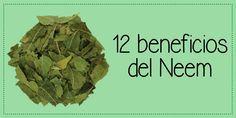 En nuestro más reciente post hablamos de los beneficios que el Neem puede brindar a tu salud.   #SaludNatural #Herbolaria #HierbasMedicinales #Neem #PlantasMedicinales
