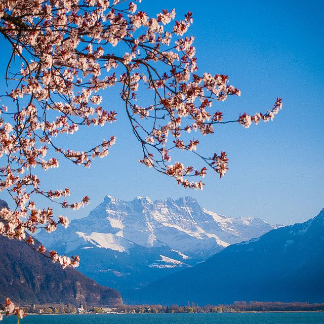 Montreux, Switzerland. France on 1 side of the Lake, and Switzerland on the other. Fabulous little city on Lake Geneva. Loved It!