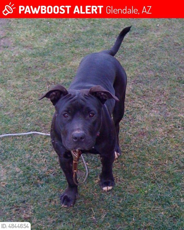 Lost Luna Last Seen December 13 2017 Glendale Az 85306 Near W Redfield Rd N 52nd Dr 602 723 8242 Find Pets Dog Cat Animal Lover