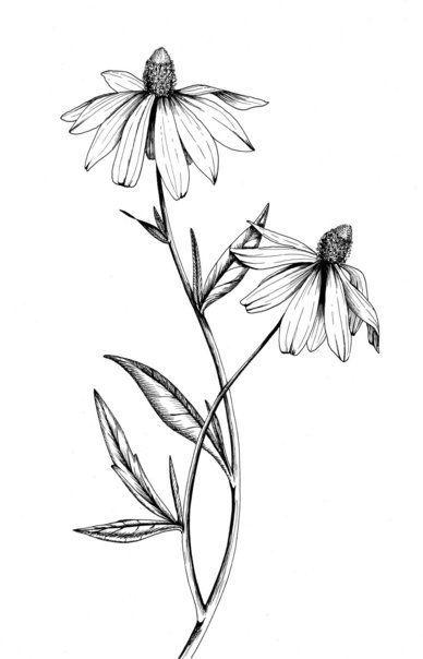 Botanical Illustrations by Meghan Witzke at Coroflot.com