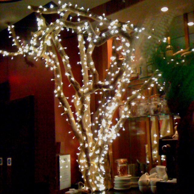 Lighted tree in Clapham bar