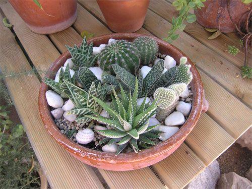 mini jardin de cactus