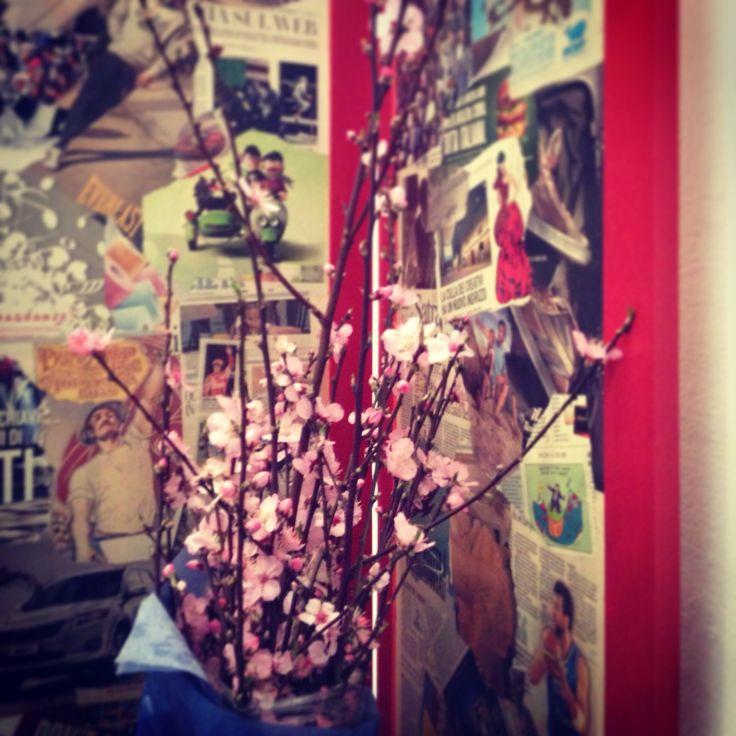 Fiori rosa, fiori di pesco.
