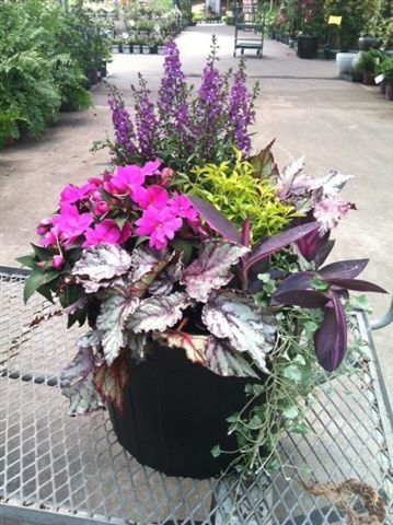 Partial sun container garden with angelonia sunpatien rex begonia altenanthera setcreasea - Container gardens for sun ...