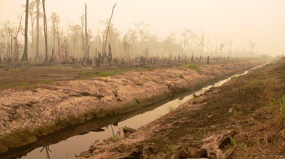 Vernichteter Torfwald in Sarawak-Bitte bis MONTAG unterschreiben: Kein Freihandel mit Palmöl!