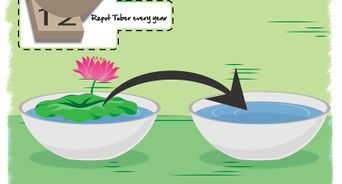For the COMPLETE WikiHow HOW TO GROW POPPIES Tutorial GO HERE: https://wp.me/P4wKm5-52 via @wikihow  http://www.wikihow.com/Grow-Poppies#video