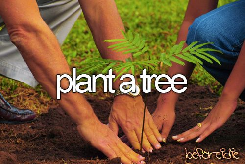 definitely wanna do this! and if i have children, i wanna plant a tree when they're born! :D