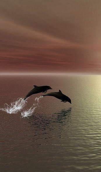 maravillosos delfines.