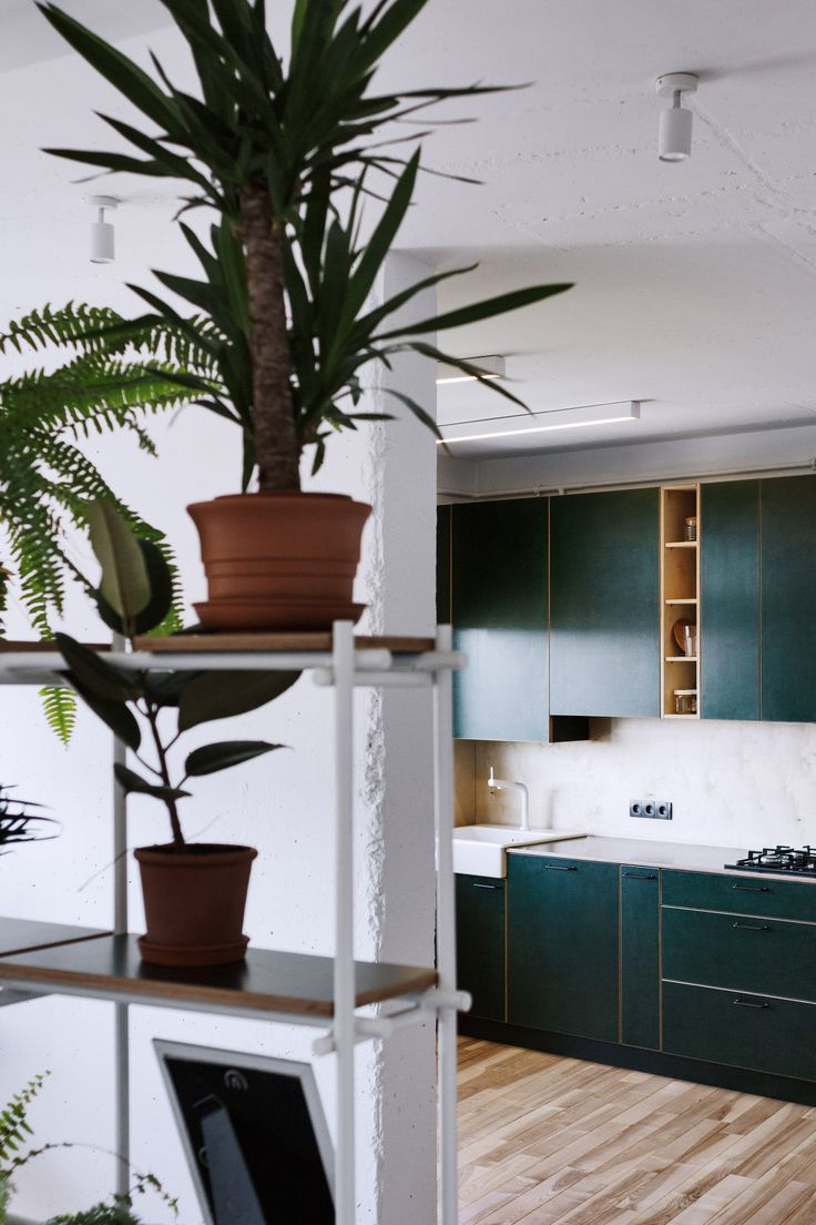 Green kitchen and wall of plants add character to low-budget apartment in Ukraine