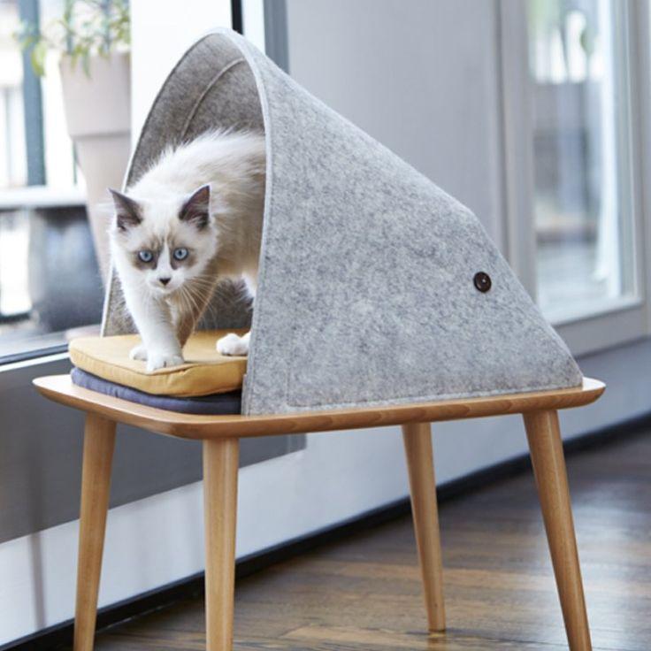 Un Appartement Élégant Avec Des Endroits Confortables Pour Les Chats