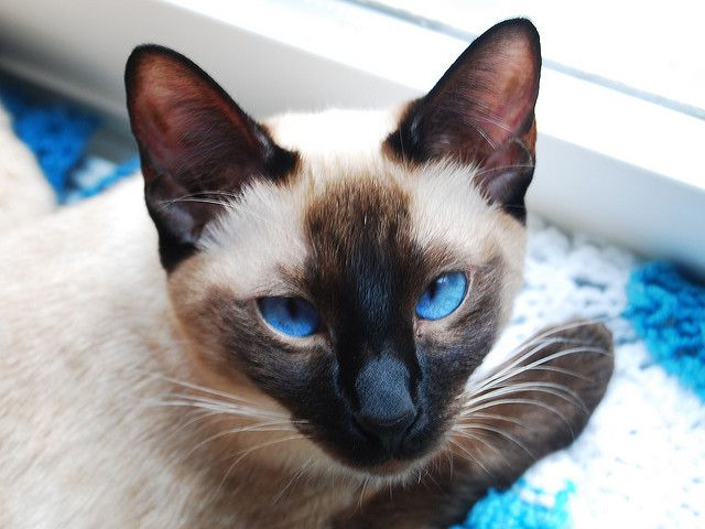 My cat, Asia.