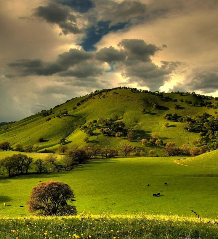 Amazing Scenery: 18 Best Images About Magical Scenery: Green Grass On