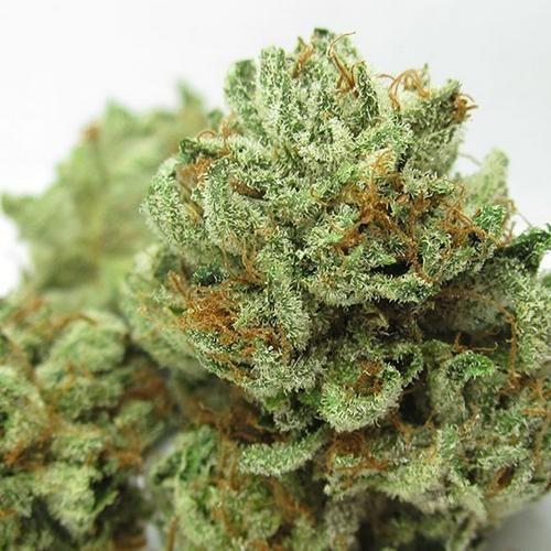 Master Kush Marijuana Strain Cannabis Strains