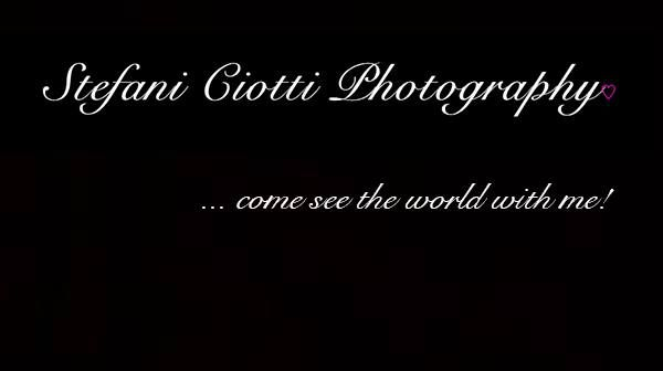 Get the best photography shots, photos from Stefani Ciotti Photography.