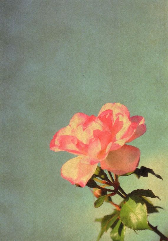 Vintage style pink rose on blue sky background by, $3.00