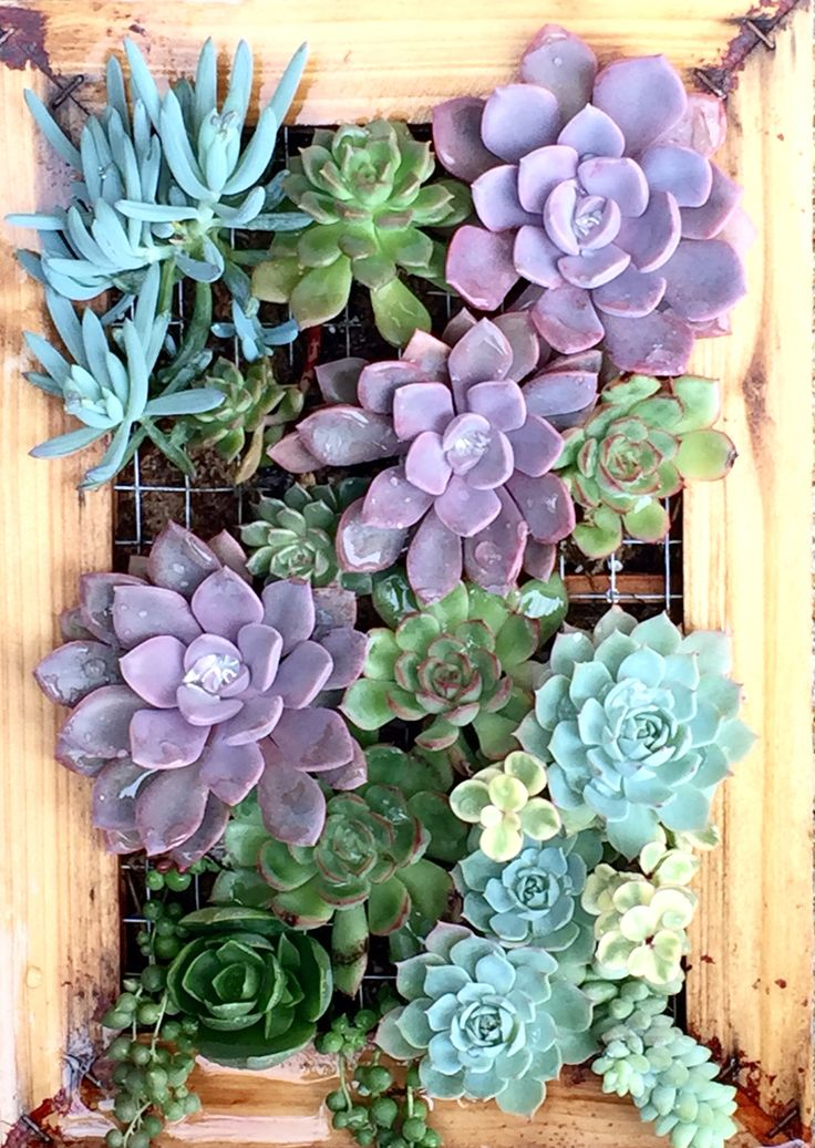 17 Best Images About Succulent Display On Pinterest