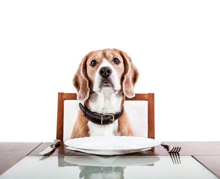 Die Xuckerstoffe Xylit und Erythrit bei Haustieren. Kalorienarme, zuckerfreie Ernährung ist für den Menschen gesund – keine Frage! Mit Xylit und Erythrit bietet Xucker eine Lösung Süßes, ohne Reue zu genießen. Anlässlich des Welttierschutztages am 04. Oktober 2015 möchten wir dem Wunsch vieler Xucker-Konsumenten nachkommen und uns mit den Risiken und Vorteilen von unseren Xuckerstoffen für Haustiere auseinandersetzen. Je nach Tierart und Zuckeraustauschstoff gibt es hier große Unterschiede.