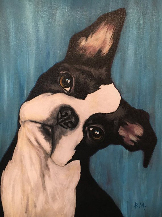 Boston Terrier painted in Acrylics on canvas