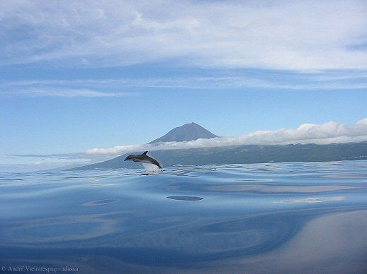 Azores - Pico Island (the highest portuguese mountain) - Great region for Whales and Dolphins #portugal #azores #whales