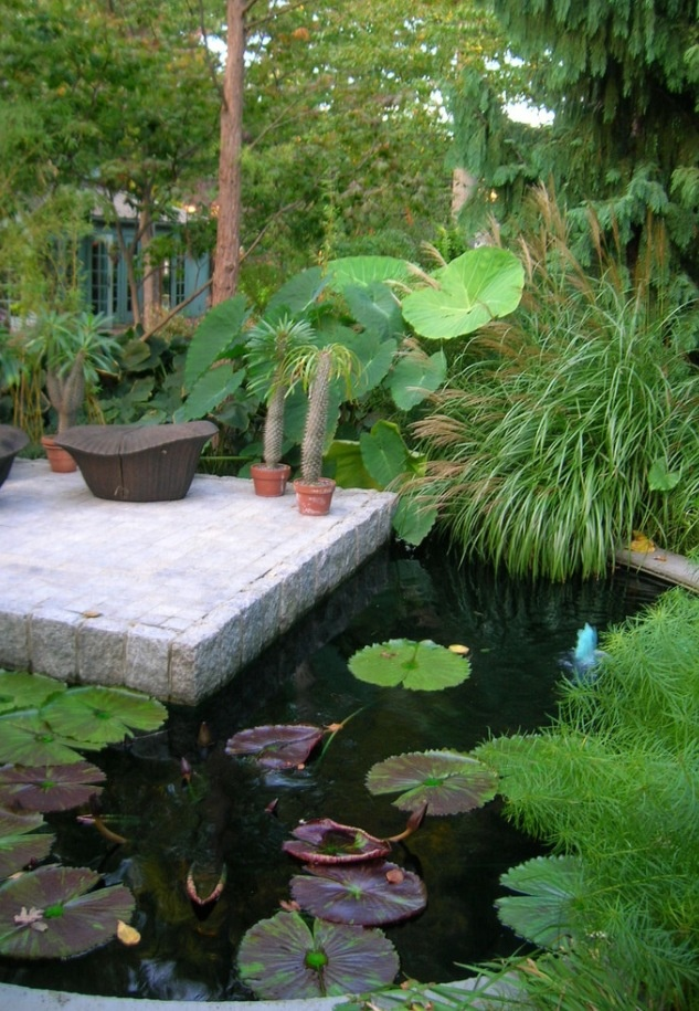 143 best koi ponds images on pinterest water features for Tropical fish pond