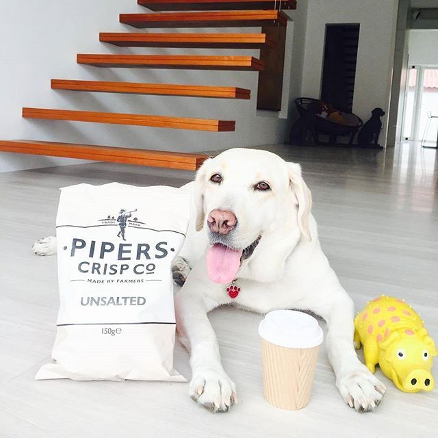 We are ready for lunch! #labrador 📷 credits by @mykrazeeelabrador