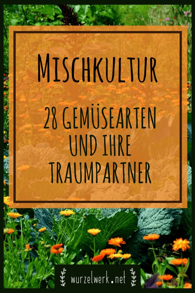 Mischkultur im Gemüsegarten: 28 wirksame Mischkultur-Kombinationen für Garten oder Hochbeet. Die ultimative Mischkulturtabelle für Tomaten, Kräuter und Co. 
