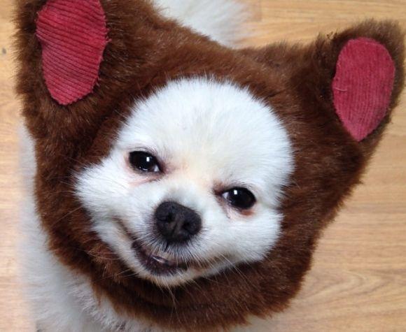 I think he likes it: Animal Cut, Animal Pics, Cute Animal, Funny Pics, Funny Dogs, Dogs Animal, Funny Guys, Adorable Funny, Bears Dogs
