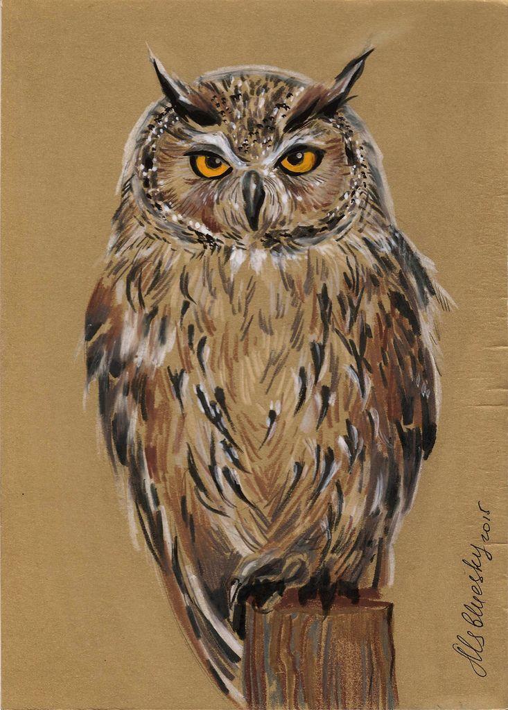 photo owl2.jpg