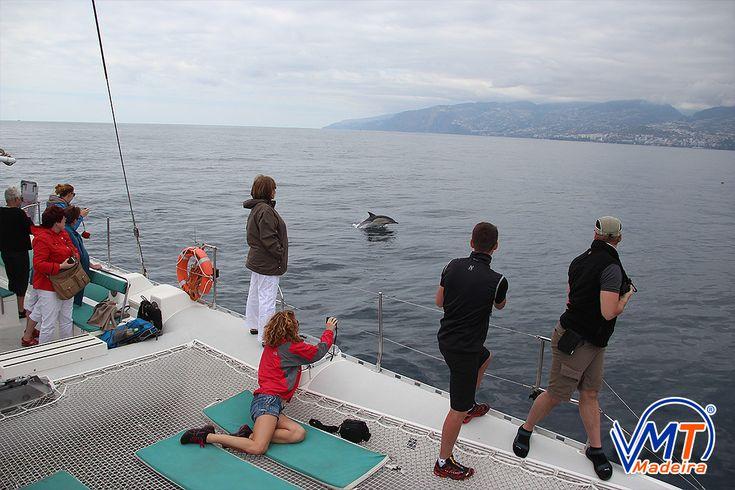 Golfinho Comum, Common dolphin, Madeira Island, VMT Madeira Catamaran Trips
