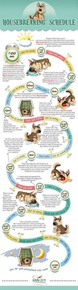 Food infographic  DOG TRAINING TIPS 44