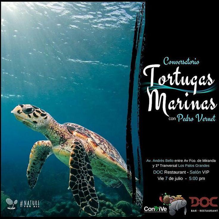 Qué sabes de las tortugas marinas? Queremos escucharte!  Las tortugas marinas son de los animales más populares y queridos por todos. Las hemos visto en fotos videos camisas documentales y hasta en dibujos animados. Pero a pesar de todo el cariño que les tenemos siguen siendo capturadas y sacrificadas todos los días en nuestras costas. De hecho todas las especies presentes en nuestro país están en peligro de extinción. Algunas de ellas en peligro crítico.  Pero podemos hacer algo y lo…