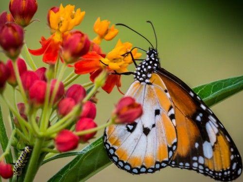 Butterfly at Ecogarden Singapore by Prabaljit Sarkar