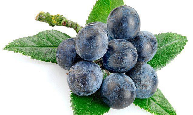 Rain brings glut of sloe berries: